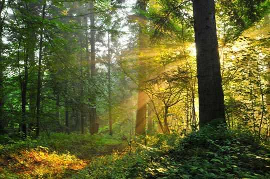 Gesunder Wald